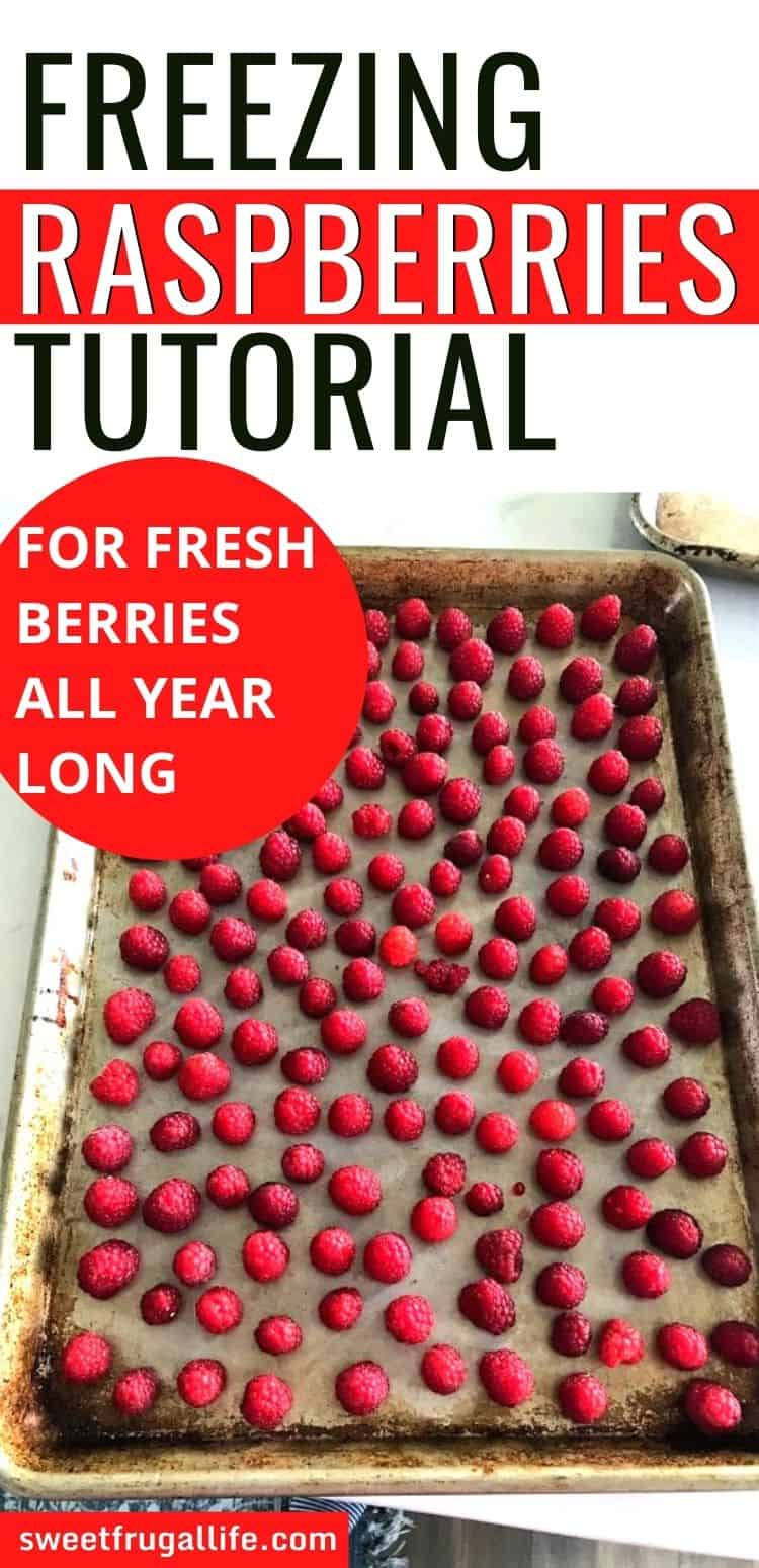 freezing raspberries tutorial