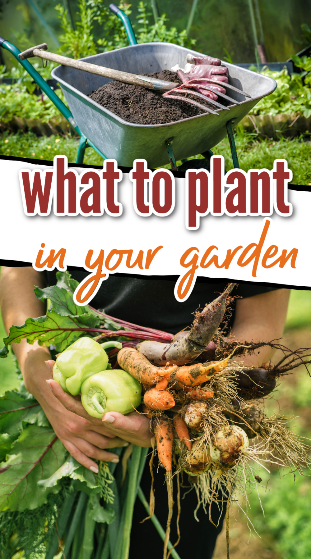 what should i plant in my garden - gardening tips for beginners