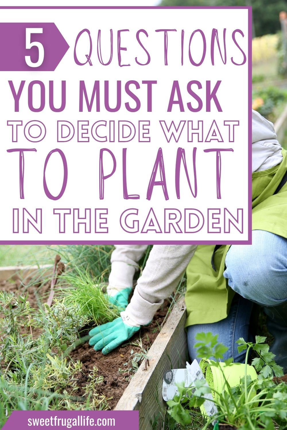 what to plant in the garden - gardening tips for beginners